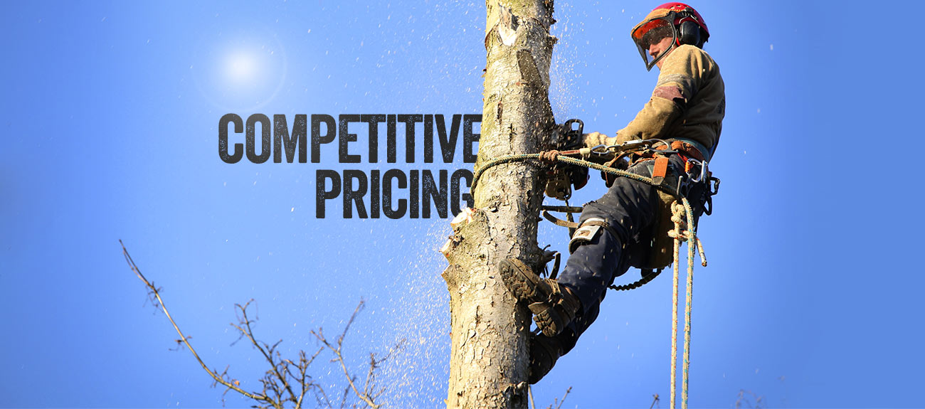 Bradshaw Tree Services - Competitive pricing - Operating on the North Shore and Northern Beaches of Sydney.