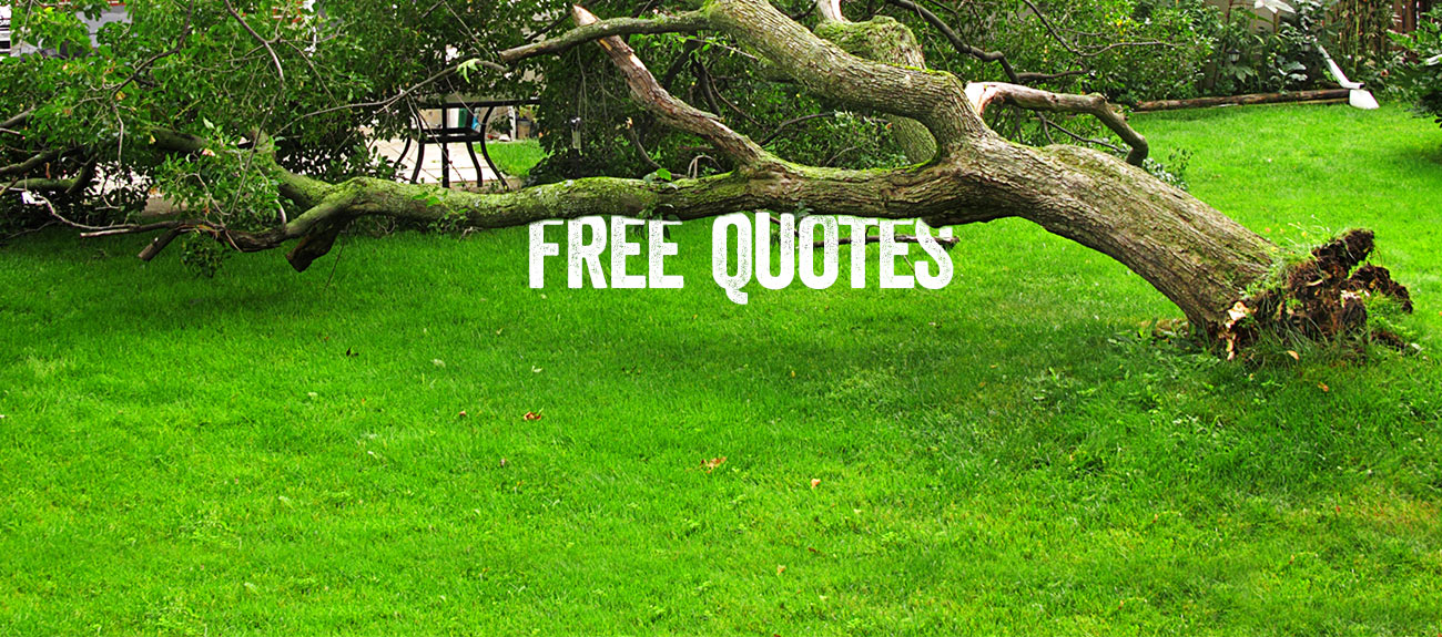 Bradshaw Tree Services - Free quotes - Operating on the North Shore and Northern Beaches of Sydney.