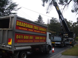 hornsby council tree removal