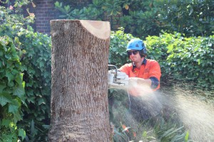 Final cuts before stump grinding Killara