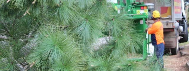 blog-entry-image--tree-removal