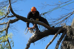 tree-removal-northern-beaches