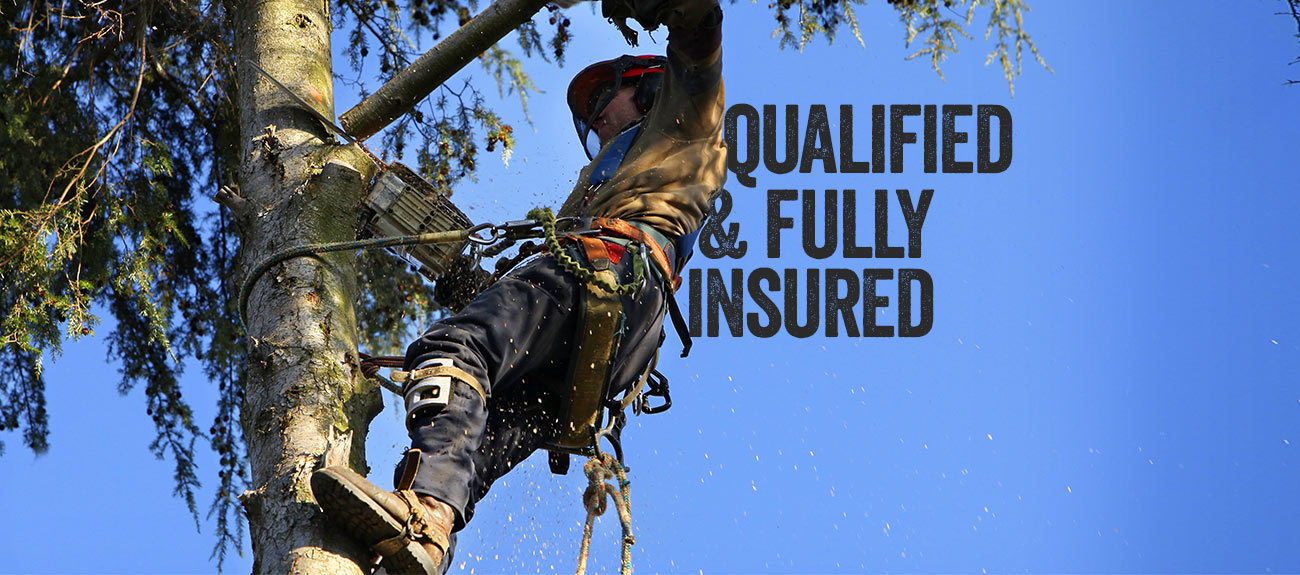 Bradshaw Tree Services - Qualified and fully insured - Operating on the North Shore and Northern Beaches of Sydney.