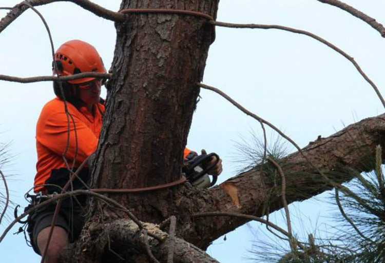 Tree removal Mosman