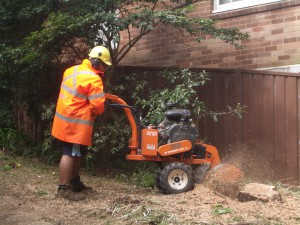 tree removal northern beaches