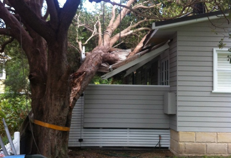 Property damage from hazardous tree Lindfield