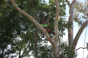 trimming tree services
