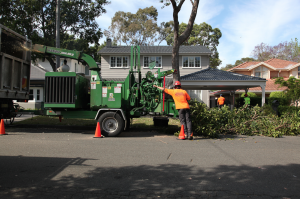 tree services in Sydney